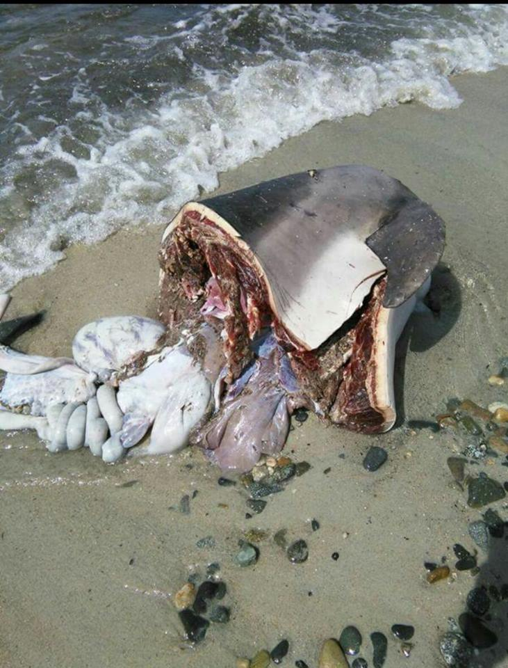 delfino ucciso capo carbonara 6