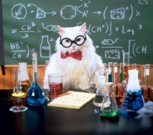 vicenza gatti ederle dissezione cirinnà - 2