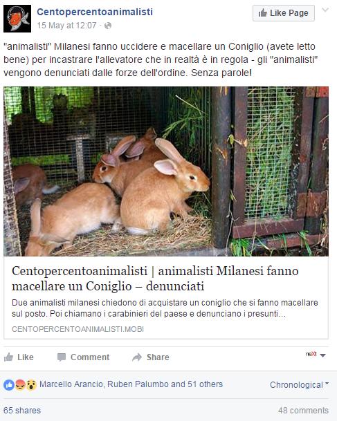 animalisti conigli crema - 2