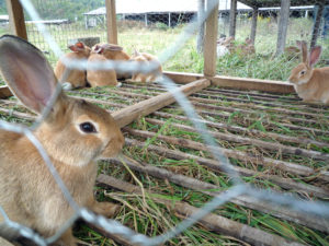 conigli animalisti blitz crema - 1