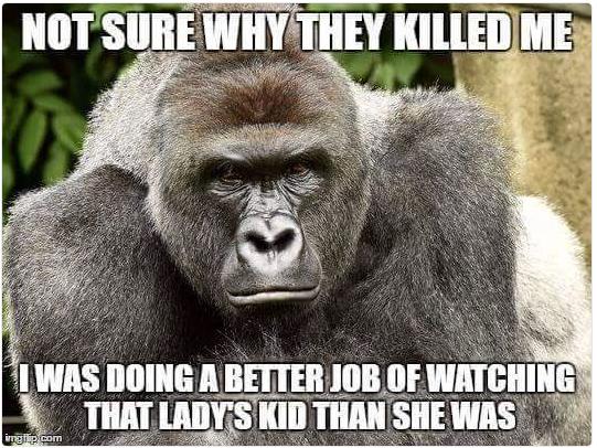gorilla ucciso zoo cincinnati - 2