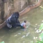 gorilla ucciso zoo cincinnati - 5