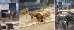 zoo suicida leoni nudo santiago cile -