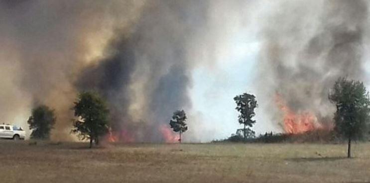 roma brucia parco pineto pineta sacchetti