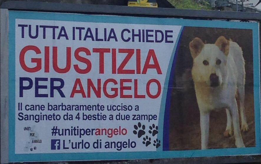 Angelo cane ucciso a Sangineto