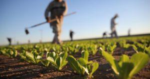 agricoltura italiana autunno nero