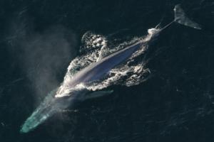latina blue whale inchiesta procura - 2