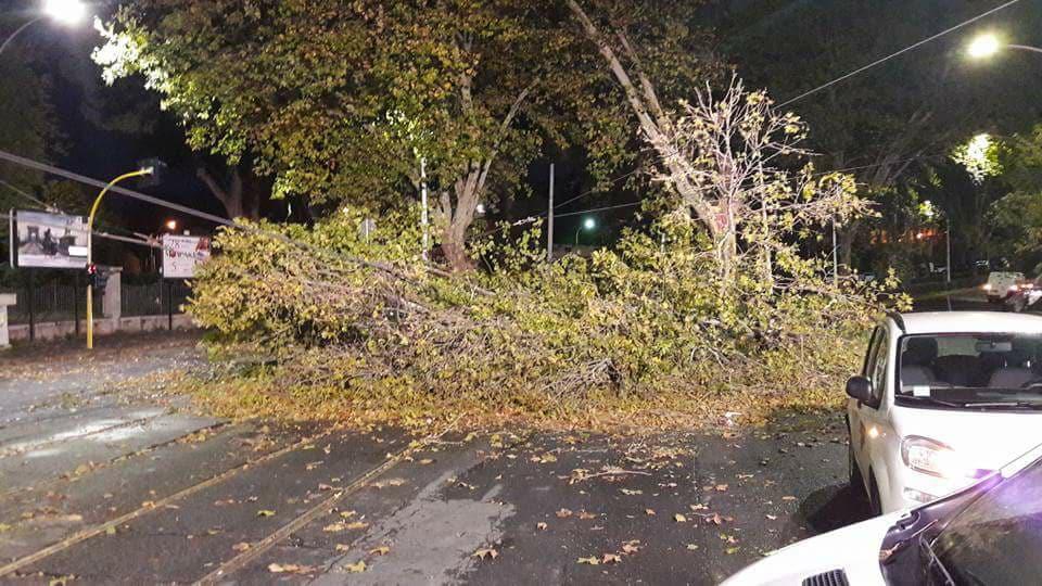 albero caduto piazzale dunant roma