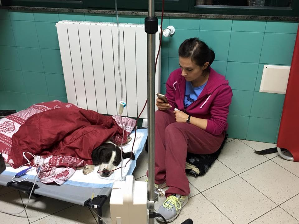 freccia cane clinica veterinaria due mari - 6