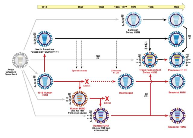 trentino influenza vaccinati burioni - 8