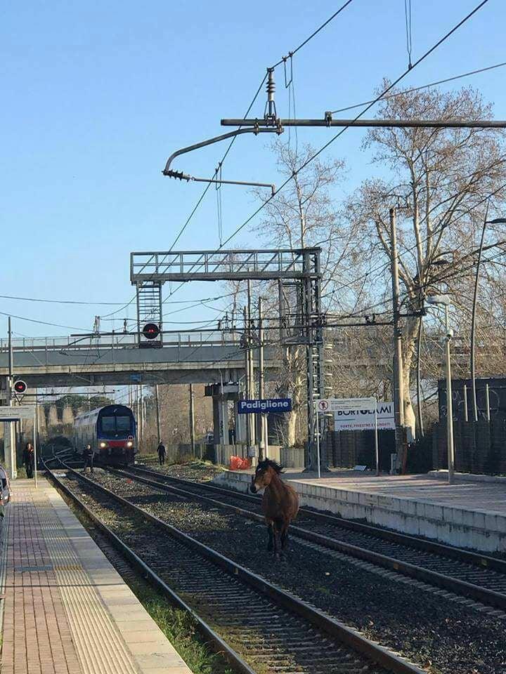 cavallo roma-nettuno