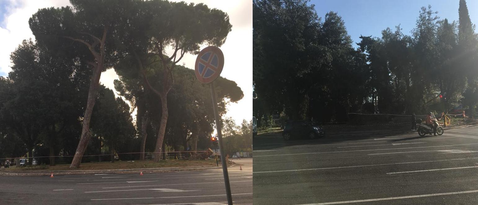 daniele diaco m5s roma capitozzatura alberi - 12